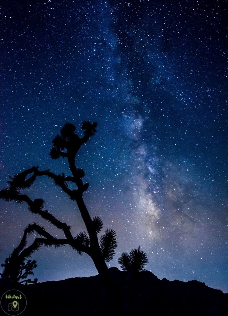 Joshua Tree Nationakpark by night